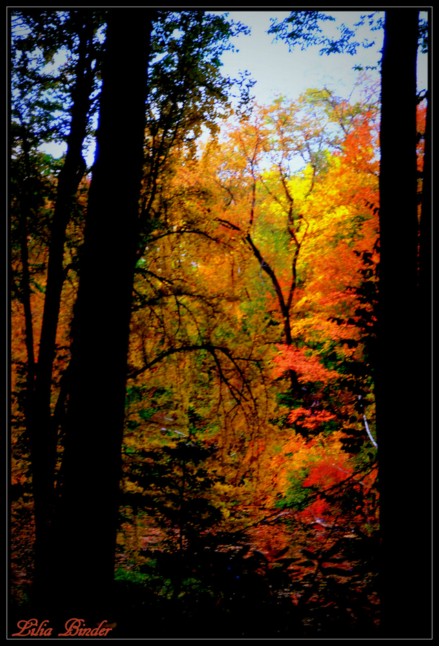 Autumn colors | Lens model not set <br> Click image for more details, Click <b>X</b> on top right of image to close