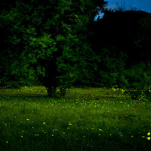 dancing firefly | Lens model not set <br> Click image for more details, Click <b>X</b> on top right of image to close