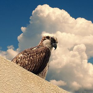 Eagle and clouds | Lens model not set <br> Click image for more details, Click <b>X</b> on top right of image to close