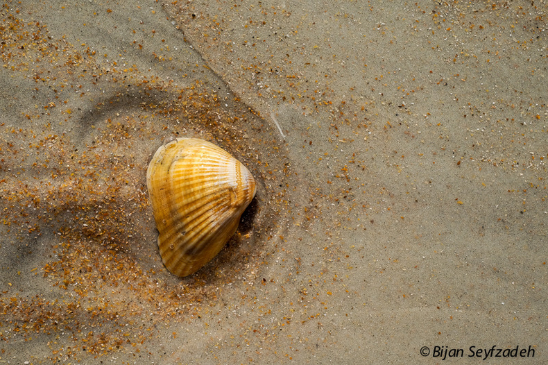 Seashell on the beach | Fuji 35mm f/1.4 <br> Click image for more details, Click <b>X</b> on top right of image to close