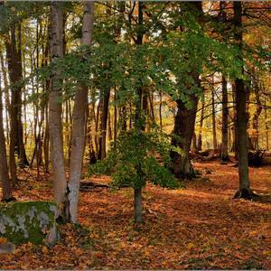 Beech Wood Forest | Fuji 18-135mm f/3.5-5.6 <br> Click image for more details, Click <b>X</b> on top right of image to close