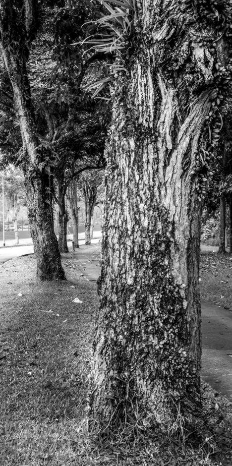 A tree-lined path | Fuji 18-55mm f/2.8 - 4.0 LM OIS <br> Click image for more details, Click <b>X</b> on top right of image to close